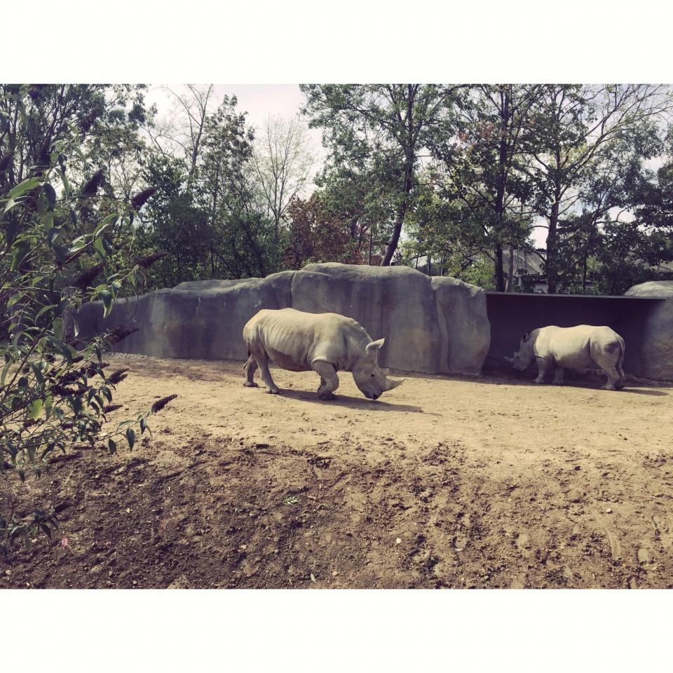 paris zoo