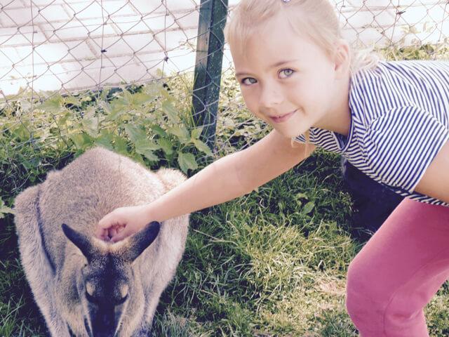 kengura rauboniu parkas zoo