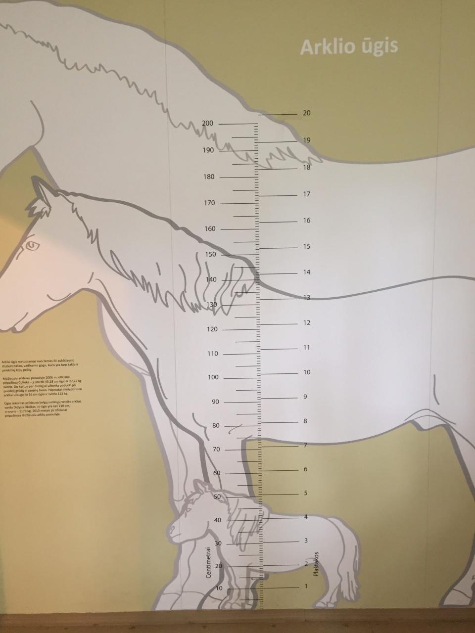 arklio muziejus anykščiai