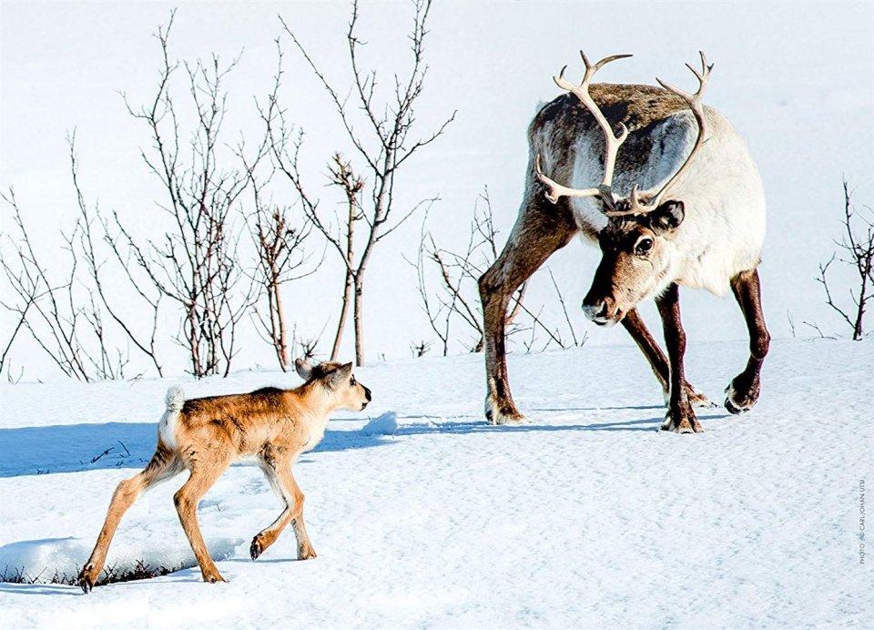 Elniuko-Ailo-kelionė-per-Laplandija-960x692.jpg