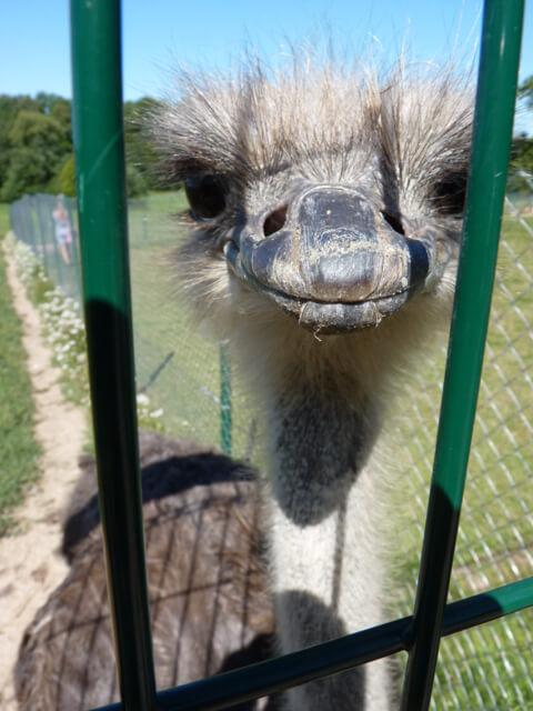 raubonių parkas zoo